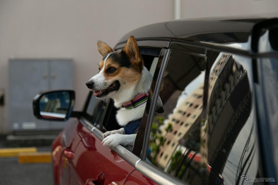 窓の犬《撮影 二城利月》