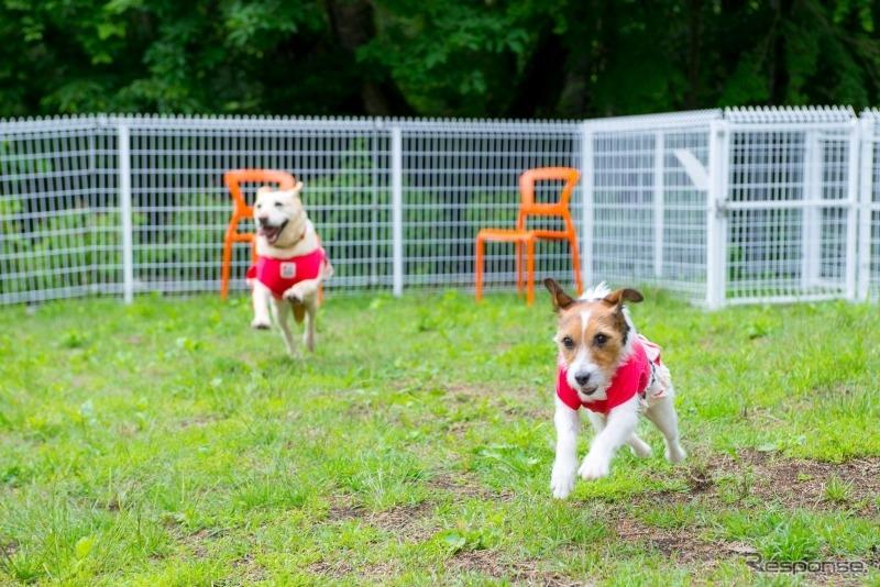 この夏行きたい理想の愛犬同伴宿、ドッグフレンドリーポイント10ヶ条《画像 青山尚暉》