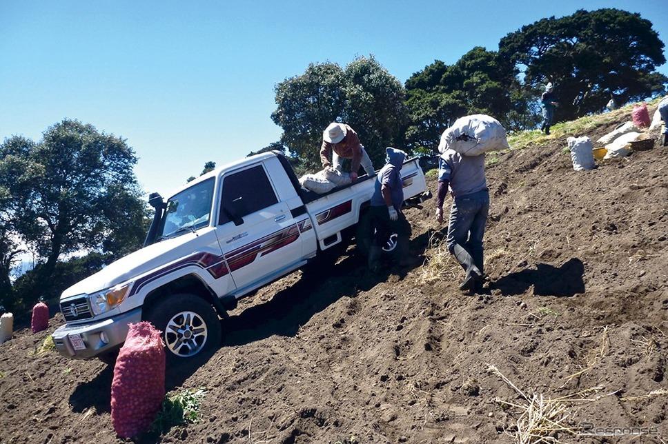 コスタリカのニンジン収穫風景《画像:トヨタ自動車》