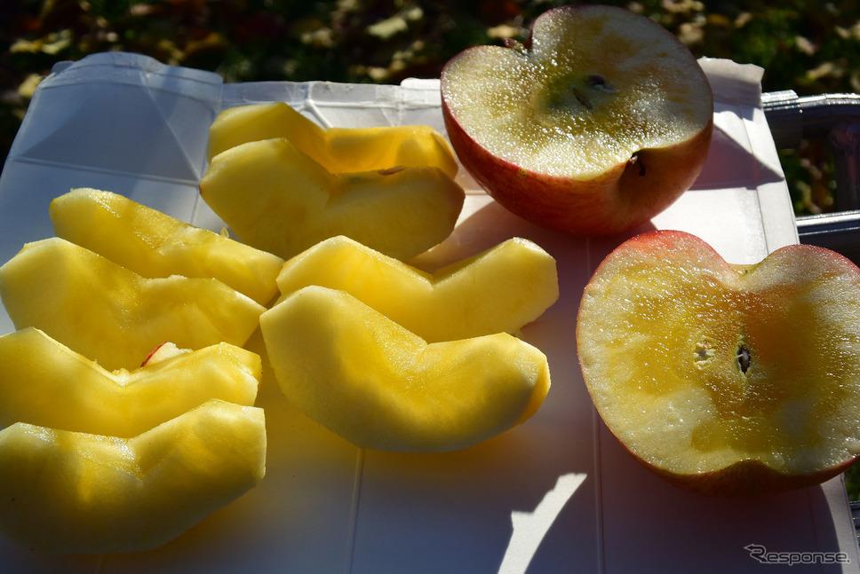 もぎたてのりんごはひと味違う。皮を剥くだけで果汁が滴り落ちるほどで、翌日にはもう味が少し変わってしまう。《撮影 井元康一郎》