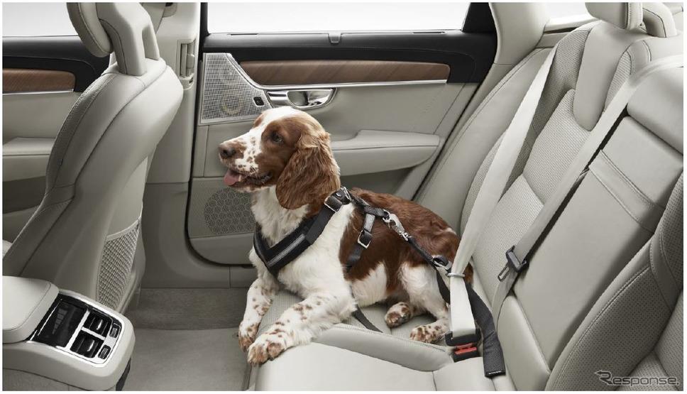 ボルボ純正の犬用シートベルト「ドッグハーネス」《photo by Volvo Cars》