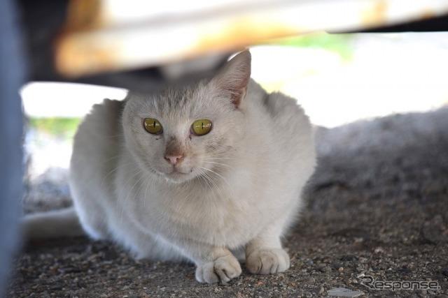 猫《写真AC》
