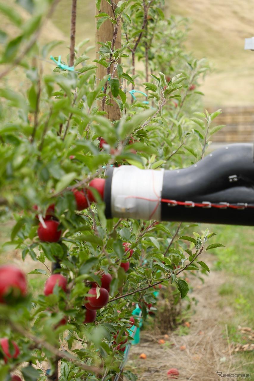 りんごを専用アームで吸い込む収穫の様子画像提供:Abundant Robotics