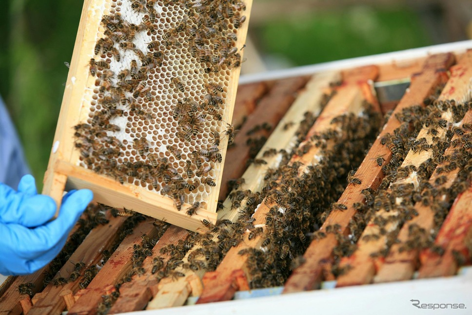 ベントレーの養蜂場《photo by Bentley》