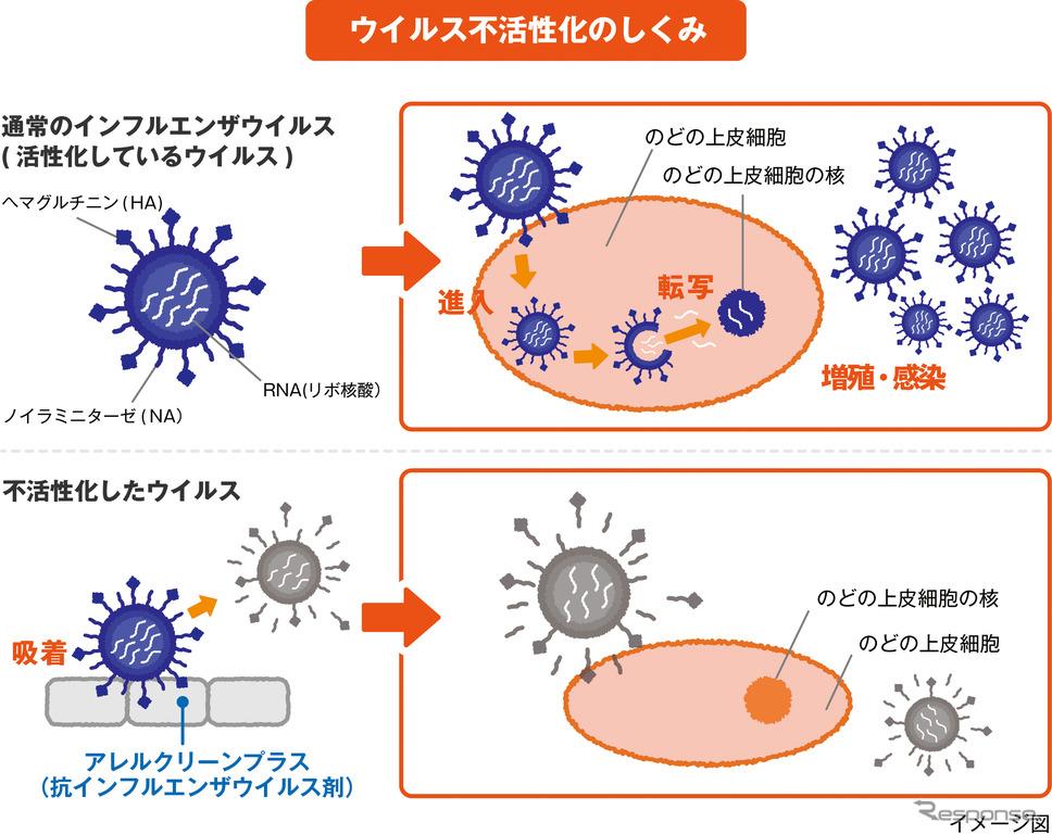 ウイルス不活性化の仕組み。《図版提供 ホンダ》