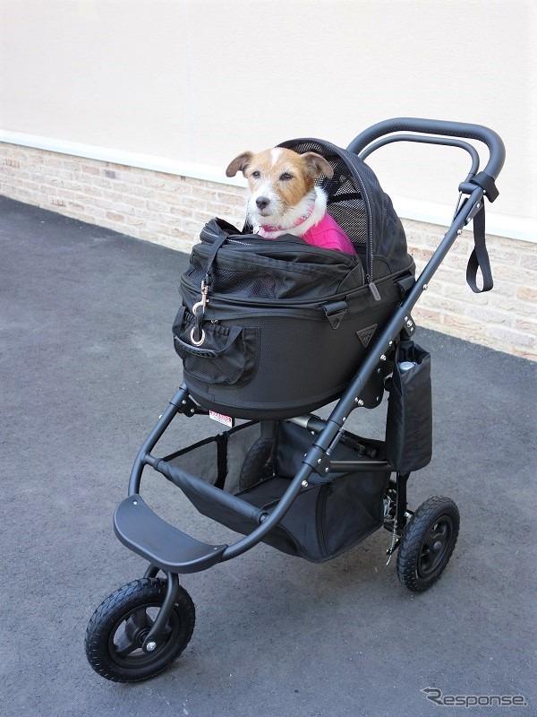 ドライブ旅行におけるドッグカートの利便性を検証《写真 青山尚暉》
