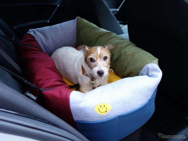 一体型ドッグカートを利用する場合は、愛犬の安全な乗車のために後席用ドッグベッドなどを用意《写真 青山尚暉》