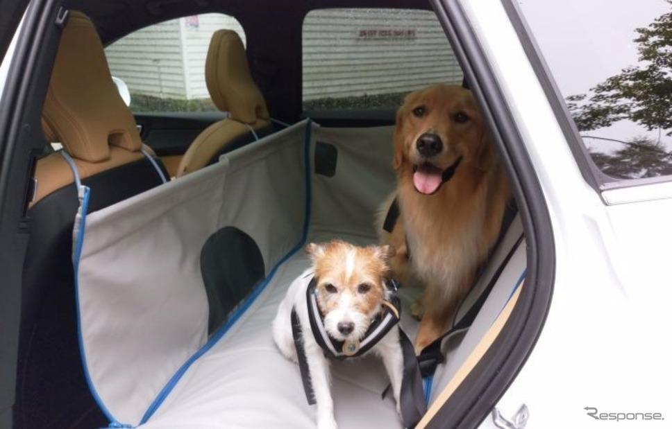ボルボの愛犬用ドッグベッド《写真撮影 青山尚暉》