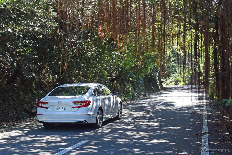 枝から根が下りるガジュマルの林を抜けて佐多岬へ。《写真撮影 井元康一郎》
