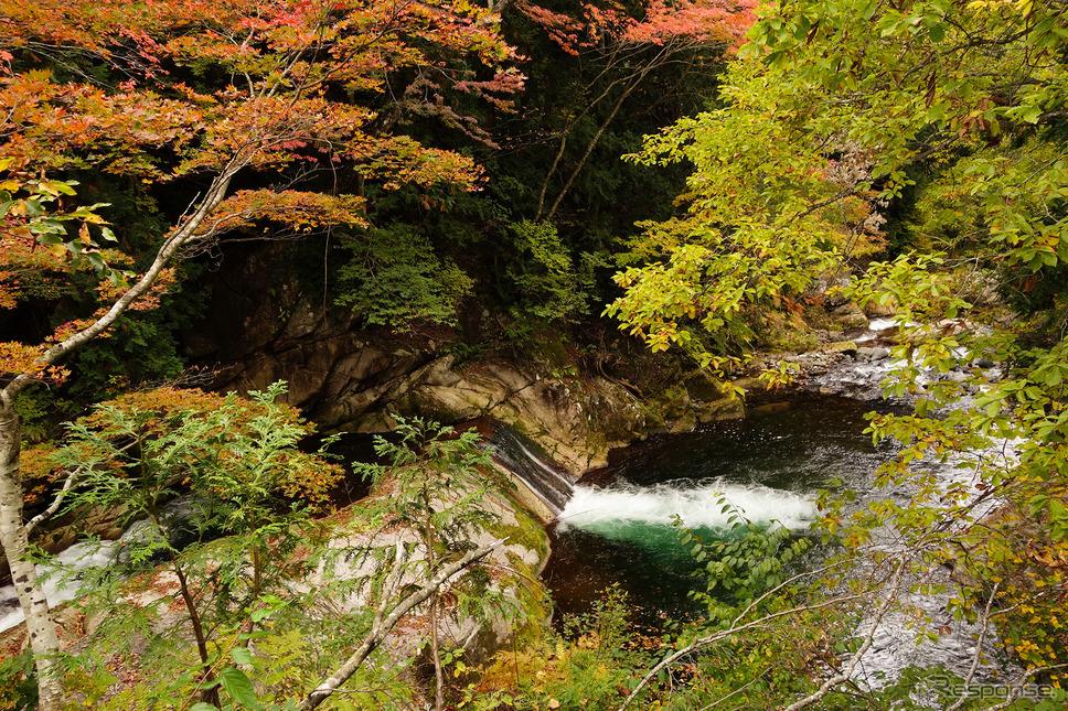 利根川源流の清澄な空気は吸っているだけで気分がいい。《写真撮影 井元康一郎》