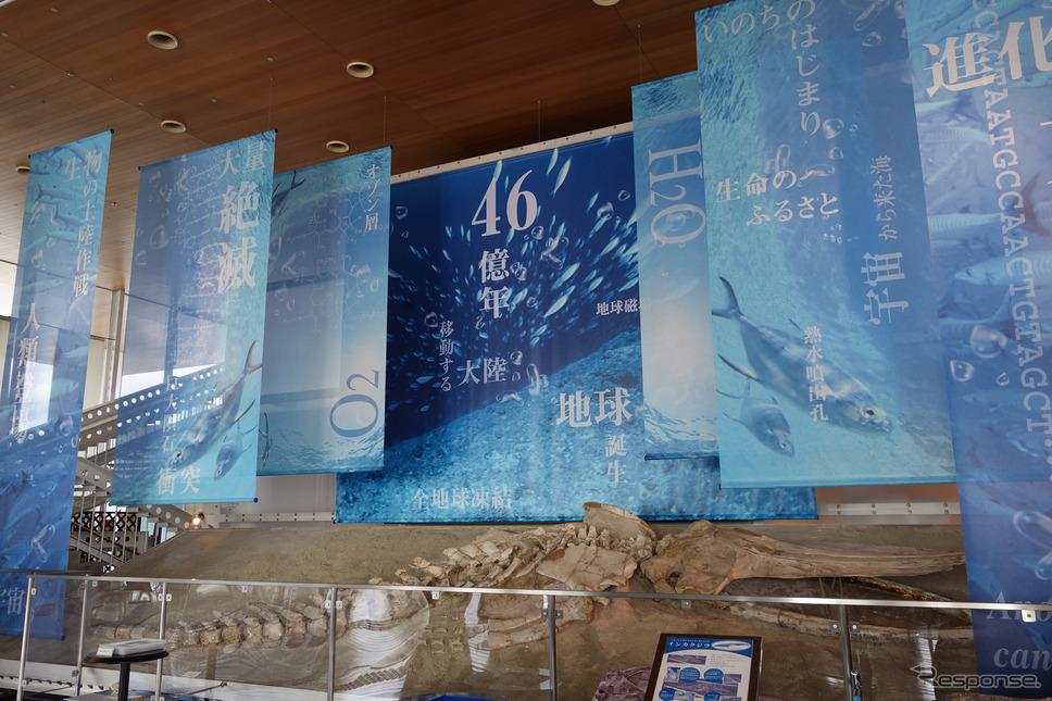 蒲郡市生命の海科学館。コロナ禍で古代生物の展示スペースがクローズになっていたのは残念無念だが、展示リストを見ると古生物マニア、地質年代マニア垂涎。写真の化石は2016年に新種認定されたというインカクジラのもの。《写真撮影 井元康一郎》